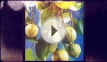 Garcinia Cambogia Is All-natural Diet Plan Dietary